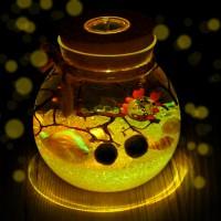 幸福海藻球生態瓶微景觀植物創意禮物